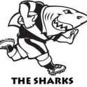 NEW SIGNINGS TO BOLSTER CELL C SHARKS FOR CURRIE CUP